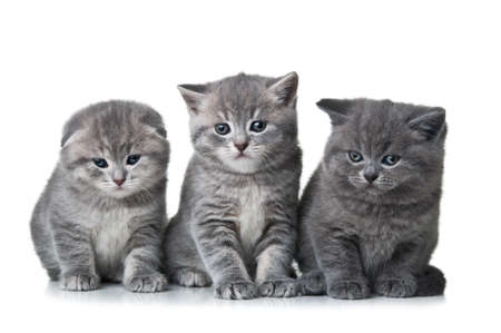 three little kittens isolated on a white background photo