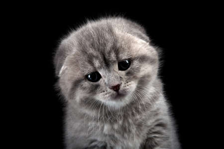sad lonely kitten isolated on a black background photo