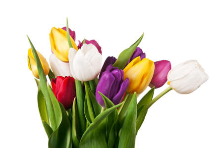 bouquet of tulips isolated on a white background photo
