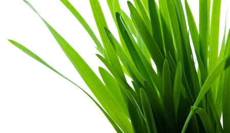 green grass isolated on a white background Stock Photo - 13509023