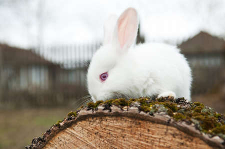 little rabbit on the yard in the village photo