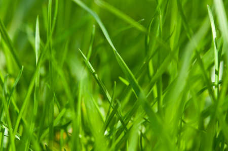 closeup of green grass background Stock Photo - 13509252