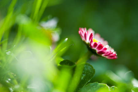 closeup of spring flower background Stock Photo - 13509120