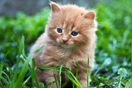 녹색 잔디에 아름다운 생강 새끼 고양이