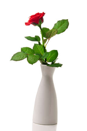 single rose: red rose in vase isolated on white background