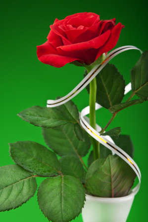 one red rose in vase on a green background photo