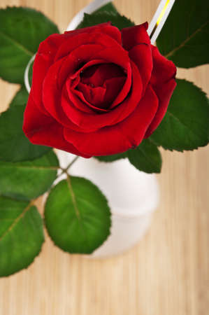 red rose in white vase background photo