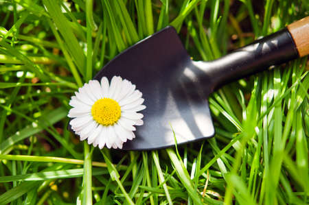 Garden shovel and chamomile on background photo