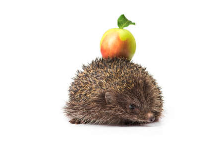 small animal hedgehog with green apple isolated on white background Stock Photo