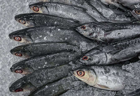 Close up of group fresh mackerel fish in a box with ice at supermarket