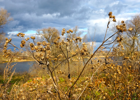 Dry burdock,autumn sky  photo