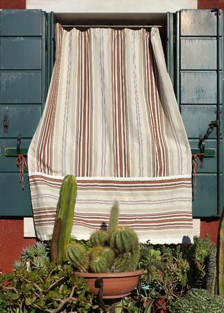window with cacti, Burano, Venice. photo