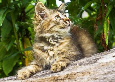 fluffy gray kitten photo