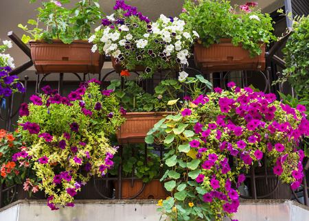 balcony decorated with colorful petunias