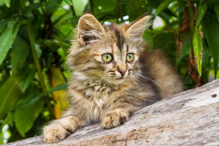 gray beautiful kitten on a green background photo