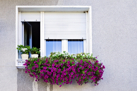 window with shutters decorated with petunias 版權商用圖片
