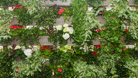 flowering plants: fence decorated with flowering plants Stock Photo