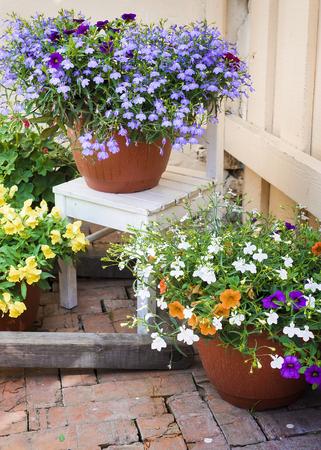 美丽的花在庭院里