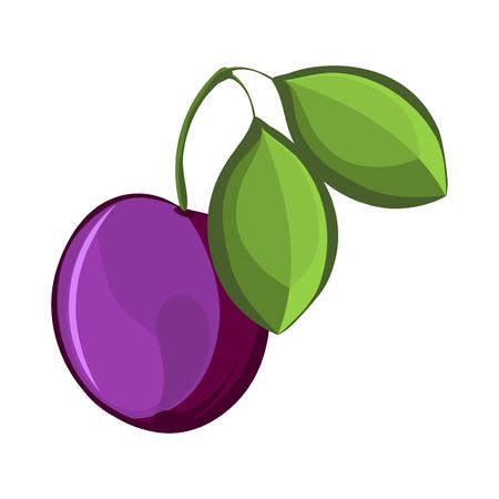 Plum Isolated, Plum Vector. Composition of Plum on white background. Plum icon. Juicy Plum, Plum Leaves. Fruit Composition for Packaging Juice, Yogurt. Plum closeup. Ripe, leaf. Illustration