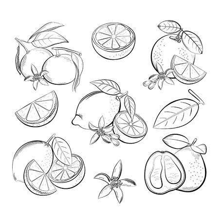 Set di agrumi saporiti con foglie e un fiore. Illustrazione vettoriale.