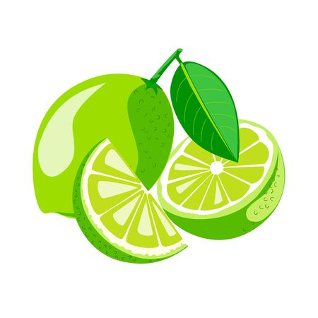 Lime with leaves.Half and segment of lime vector illustration.