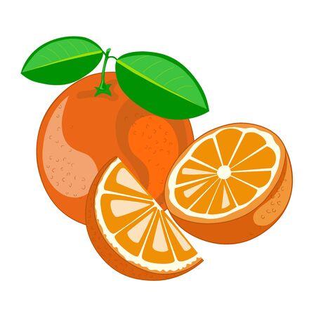Orange with leaves.Half and segment of orange.Vector illustration. Illustration