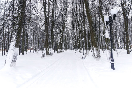 Winter park. Alley in the park covered with snow 스톡 콘텐츠