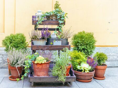 potted street flowers on wooden shelves Banque d'images - 138472272