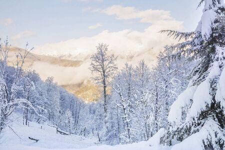 mountain snowy slope overgrown with trees 版權商用圖片