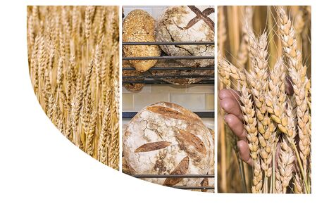 Collage of photos with fresh bread and space for text