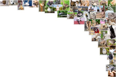Collage of photos of pets and birds and text place 版權商用圖片