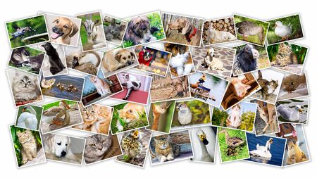 Collage of photos of pets and birds