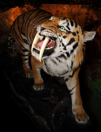 toothed: Saber-toothed tiger  Machairodontinae  on a dark background
