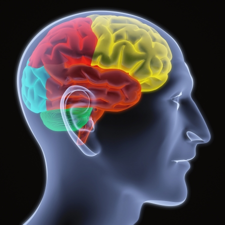 Scanning of a human brain by X-rays. part of the brain highlighted in different colors.