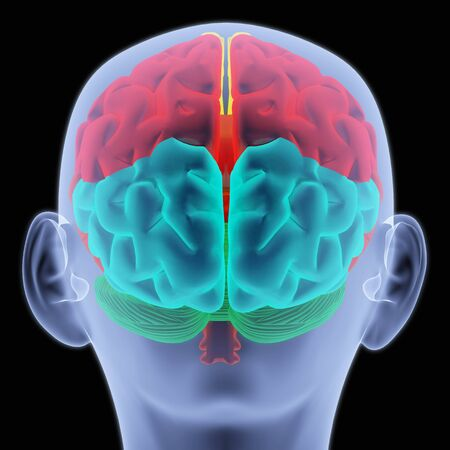 Scanning of a human brain by X-rays. part of the brain highlighted in different colors. Stock Photo - 6682126