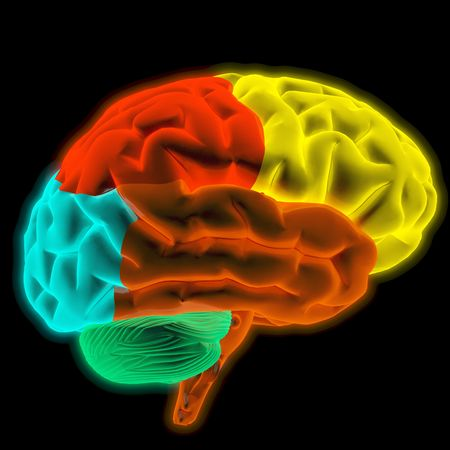 Scanning of a human brain by X-rays. part of the brain highlighted in different colors. Stock Photo - 6681427