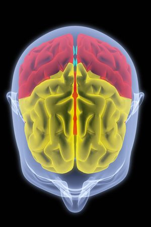 entrails: Scanning of a human brain by X-rays. part of the brain highlighted in different colors.