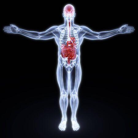 bowel disease: entra�as humanas y cerebro en rayos X. procesamiento 3D. Foto de archivo