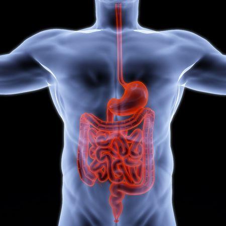 es�fago: entra�as humanas bajo los rayos X. procesamiento 3D. Foto de archivo