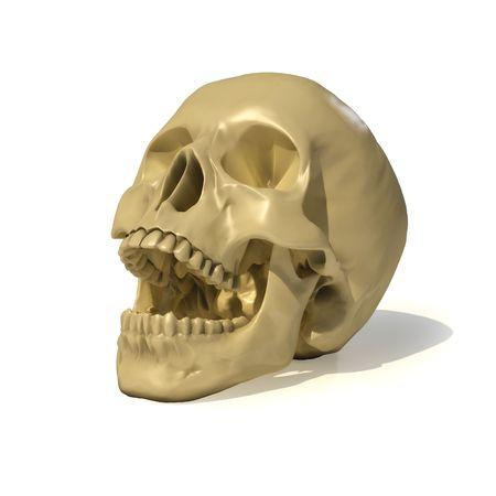 fossil: human skull.  Stock Photo