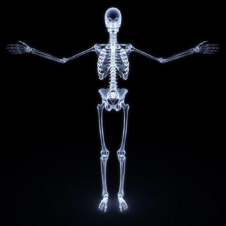 esqueleto humano: Radiograf�a del esqueleto humano. aislados en blanco