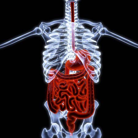 entrails: human entrails under X-rays. 3d render.
