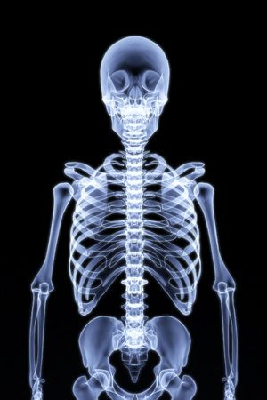 chest x ray: human skeleton under the X-rays. 3d render