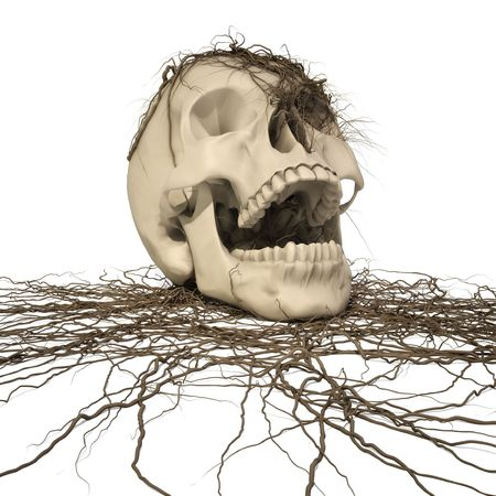 human skull with a trailing vine.  photo