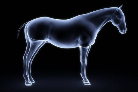 biological science: horse x-ray