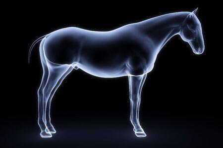 x ray: horse x-ray