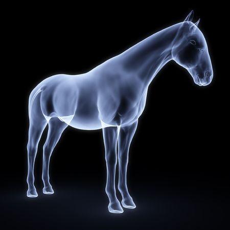 chest x ray: cavallo a raggi x Archivio Fotografico
