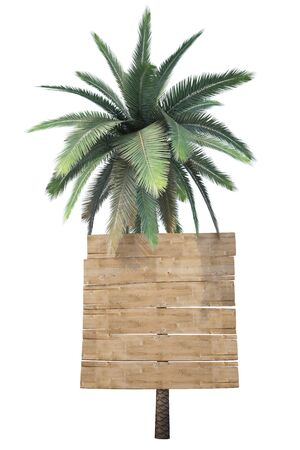 wooden signs hanging on the trunk of a palm. isolated on white. photo