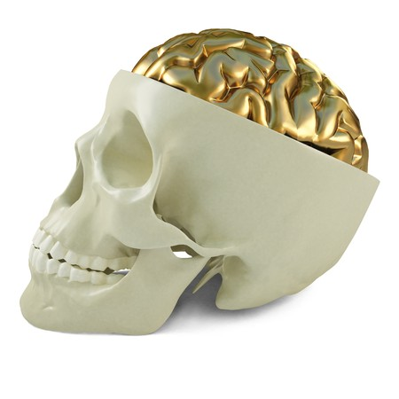 golden brains in the human skull. 3d image. Stock Photo - 7969091