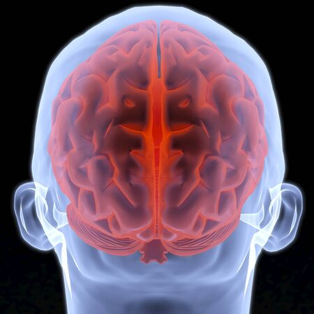 zenuwcel: Scannen van menselijke hersenen door x-stralen. 3D beeld. Stockfoto
